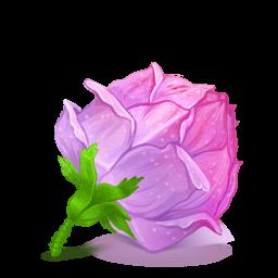 Box 22 Rose Pink icon