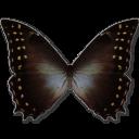 Morpho Amphitrion icon