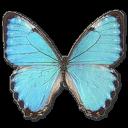 Morpho Portis Male icon